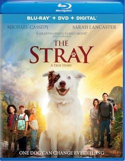 The Stray (DVD) [Blu-ray]